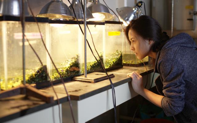 Biology student observing turtles in lab